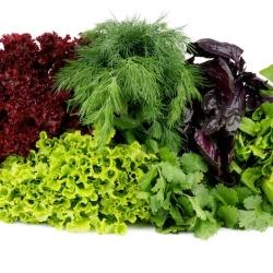 Семена зеленопряных