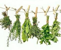 Докторские растения