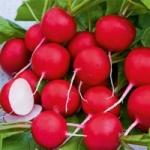 купить семена редиса Сакса 2