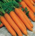морковь Длинная красная безсердцевинная