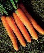 морковь Лонг роте Штумпфе