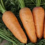 Морковь Норма F1