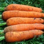 Морковь Грета F1