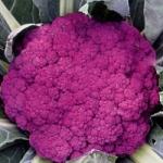 капуста цветная Пурпурная сицилийская