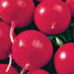 редис Рубин купить семена