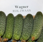 Семена огурца Вагнер F1
