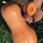 Семена тыквы Виолина